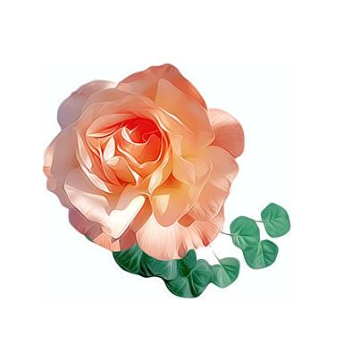 磨皮花朵png免抠图素材