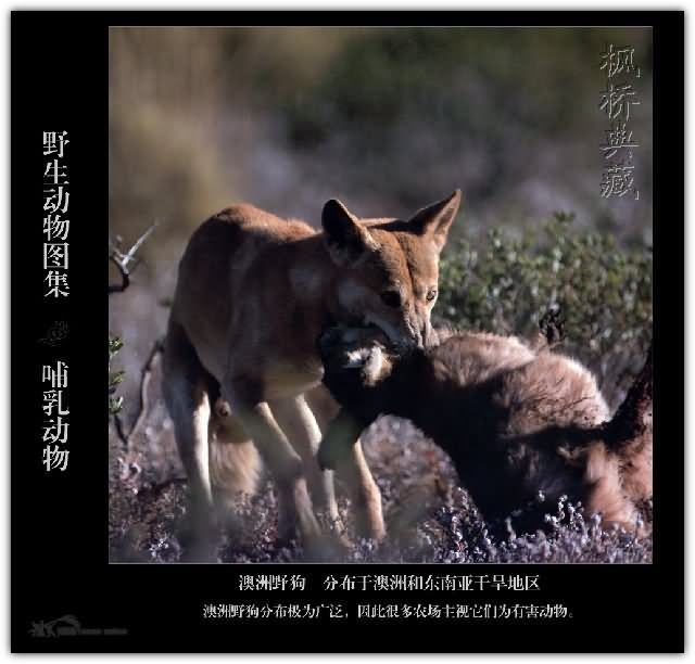 保护野生动物措施